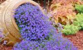 Những cách trồng hoa lạ mắt cho khu vườn nhà bạn