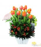 Tulip cam