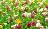 Hoa cho ngày mới